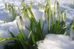 Медитация «Весна Твоей Новой Жизни»