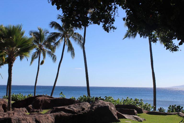 Пальмы на Мауи